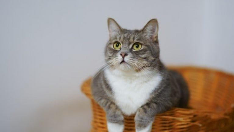 AR pet portfolio example