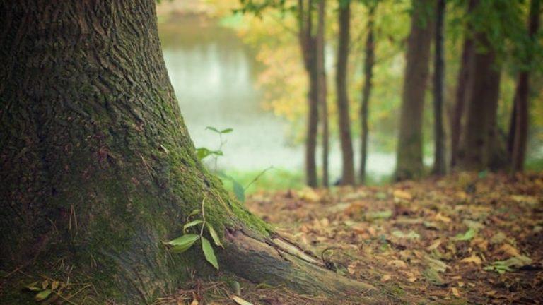 forest-hd-wallpaper-moss-4700
